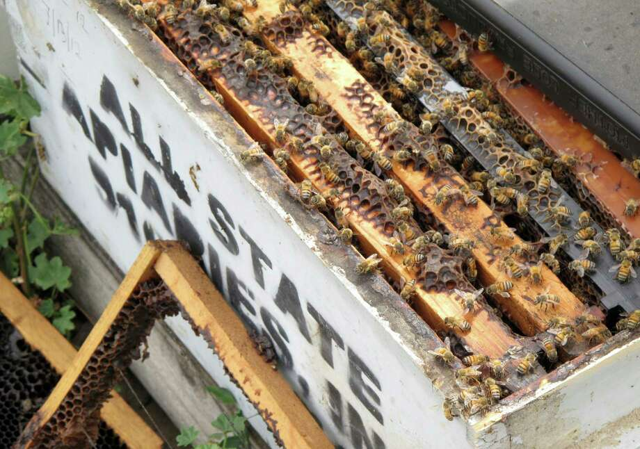 A beekeeper who has recovered some damaged hives filled with dying bees estimated her family's business lost $200,000 in rental income, equipment and queen bees.  Photo: Scott Smith, STF / Copyright 2017 The Associated Press. All rights reserved.