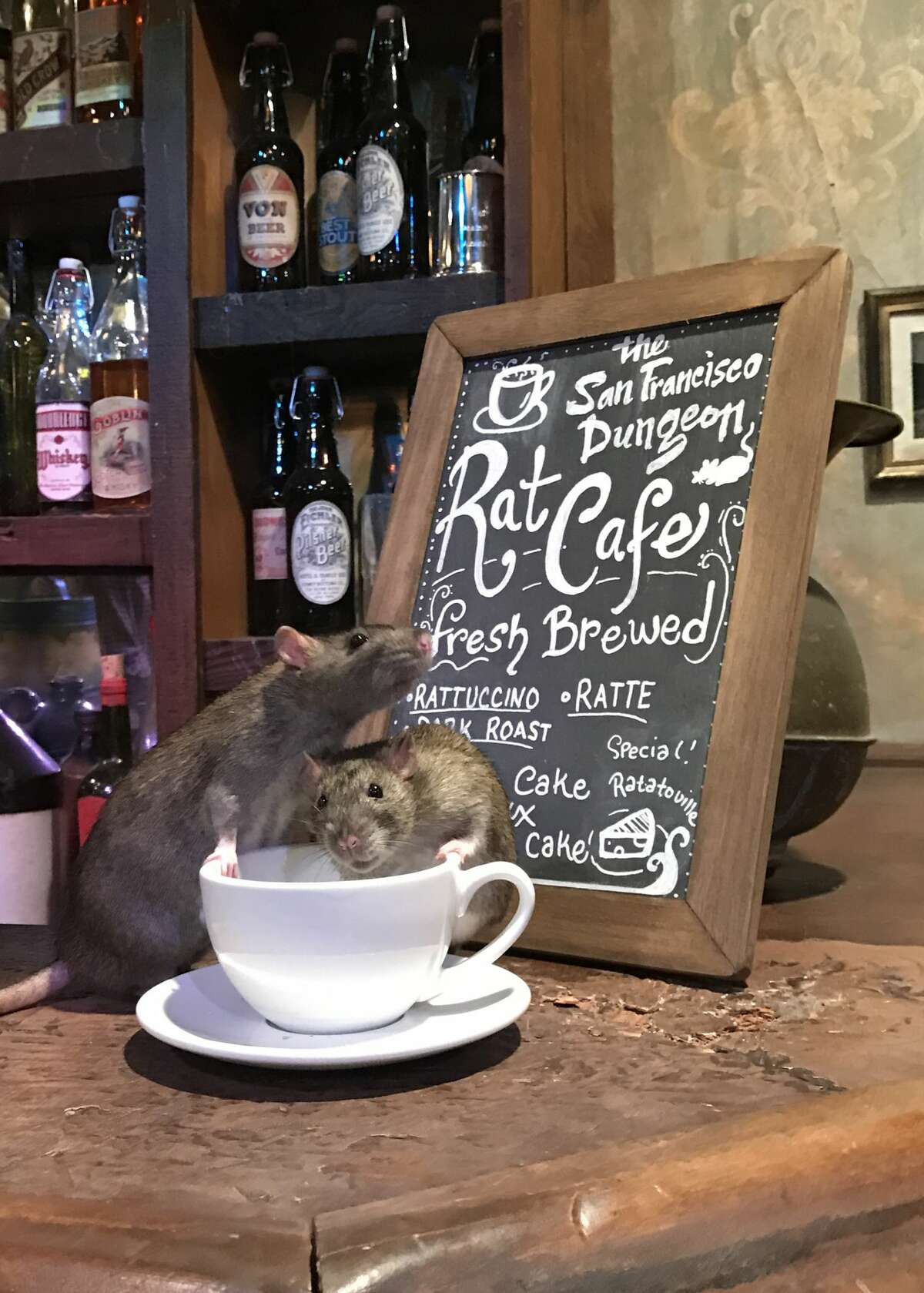 The San Francisco Dungeon is hosting a pop-up cafe featuring food, coffee and... domesticated rats.