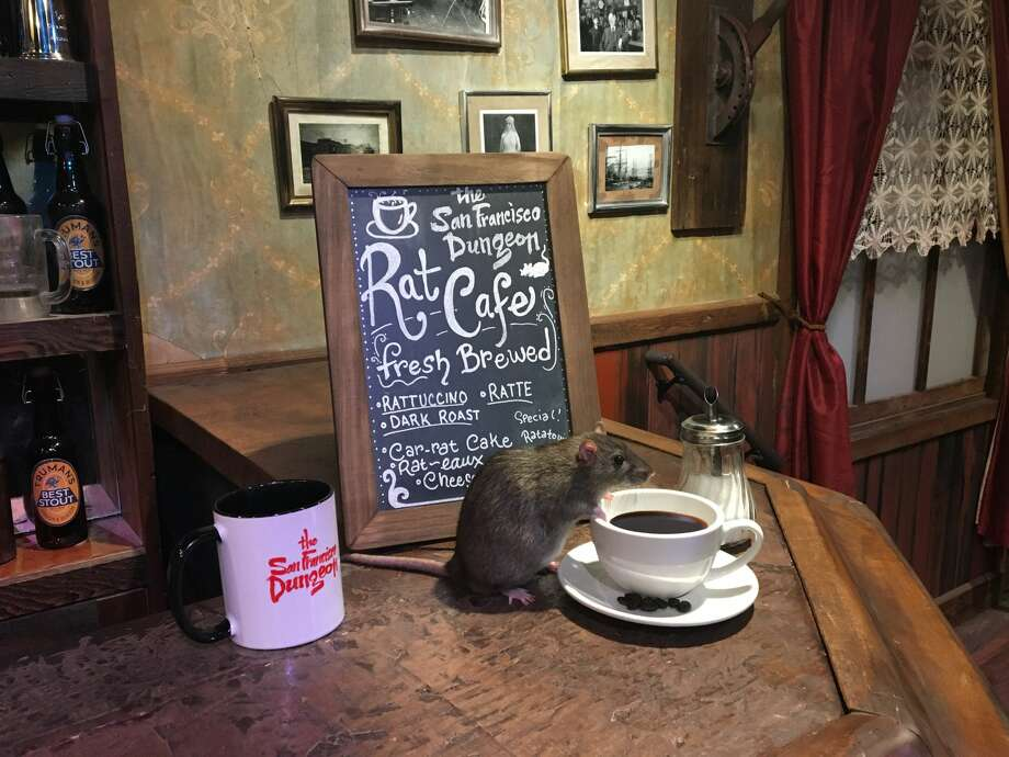 The San Francisco Dungeon is hosting a pop-up cafe featuring food, coffee and... domesticated rats. Photo: Courtesy The San Francisco Dungeon