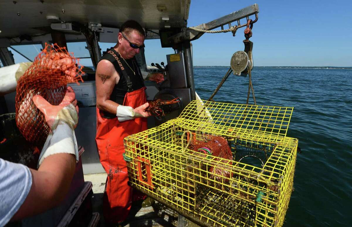 Mike Kalaman, a Norwalk lobstermen, fishes on Long Island Sound for The Norm Bloom and Sons Co. last year.