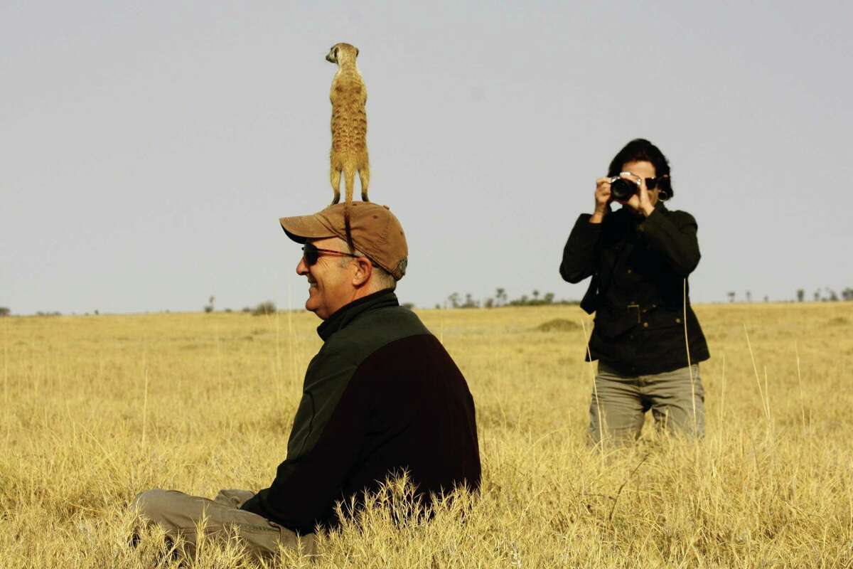 Some of the guests on a recent Tauck safari through Botswana, South Africa, and Zambia had the chance to get close to some meerkats.