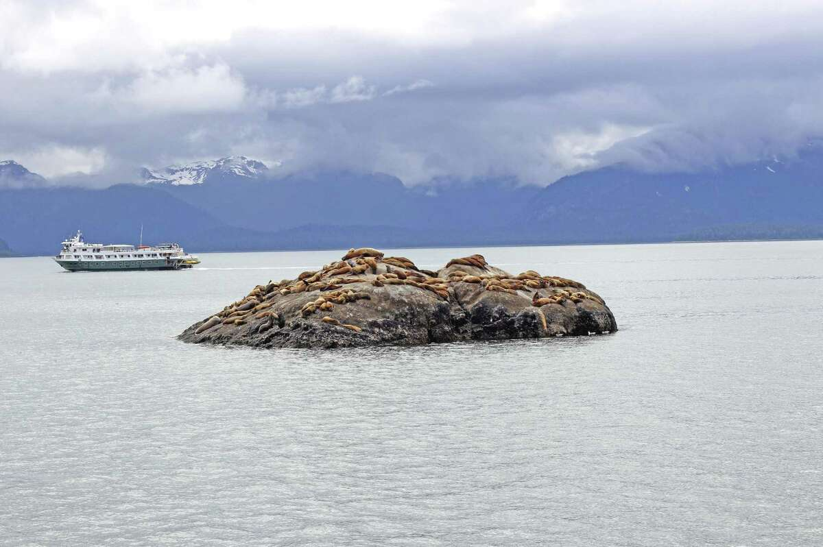 Sea lion colony on rock in Glacier Bay Inside Passage Southeast Alaska. Tina Cacopardo, an AAA office manager in Connecticut, says Alaska seems to have gotten on vacationers' bucket lists as a far away place they vow to see.