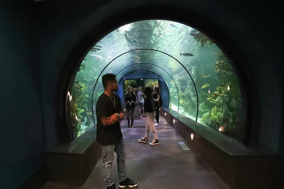 Guest walk through the Moody Gardens tunnel in a one-million gallon exhibit in the newly renovated Aquarium Pyramid following a $37 million renovation Thursday, May 18, 2017, in Galveston. Media had the opportunity to experience the new Gulf of Mexico Oil Rig Exhibit complete with an in-tank diver presentation and Q&A session featuring a new diver communication system. They also viewed the Humboldt Penguin Exhibit, Flower Garden Banks Exhibit and the Caribbean Exhibit in this final sneak peak of the Aquarium Pyramid before its public grand reveal on May 27. Photo: Steve Gonzales, Houston Chronicle / © 2017 Houston Chronicle