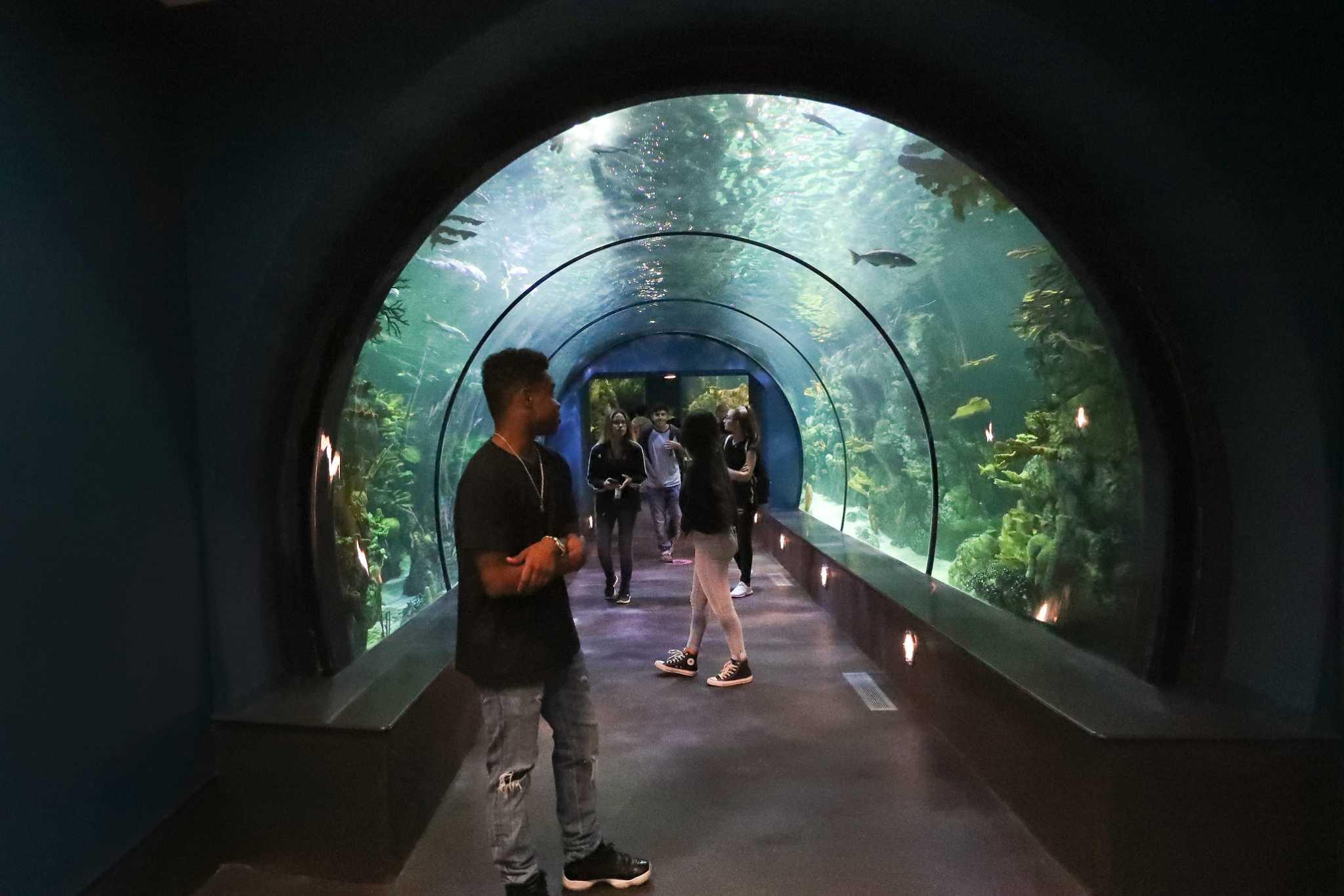 Moody Gardens Unveils 37 Million Aquarium Renovations Houston Chronicle