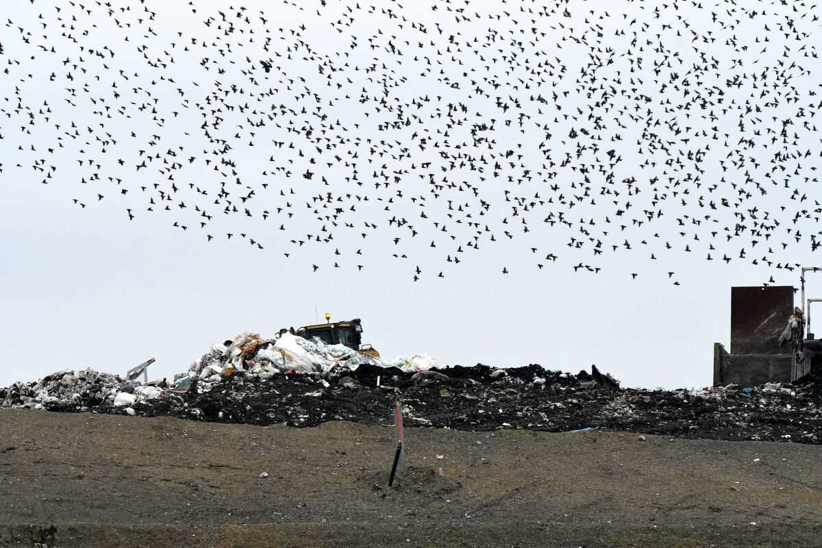 A flock of birds swarms above Colonie Landfill on Friday, Jan. 20, 2017, in Colonie, N.Y. (Will Waldron/Times Union)