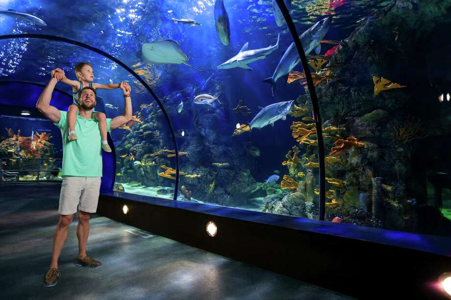 Moody Gardens will host a Grand Reveal May 27 giving guests their first glimpse into the completed multi-phased $37 million renovation project at the Aquarium Pyramid. Photo: Robie Capps, Photographer / copyright 2017 Robie Capps Photography