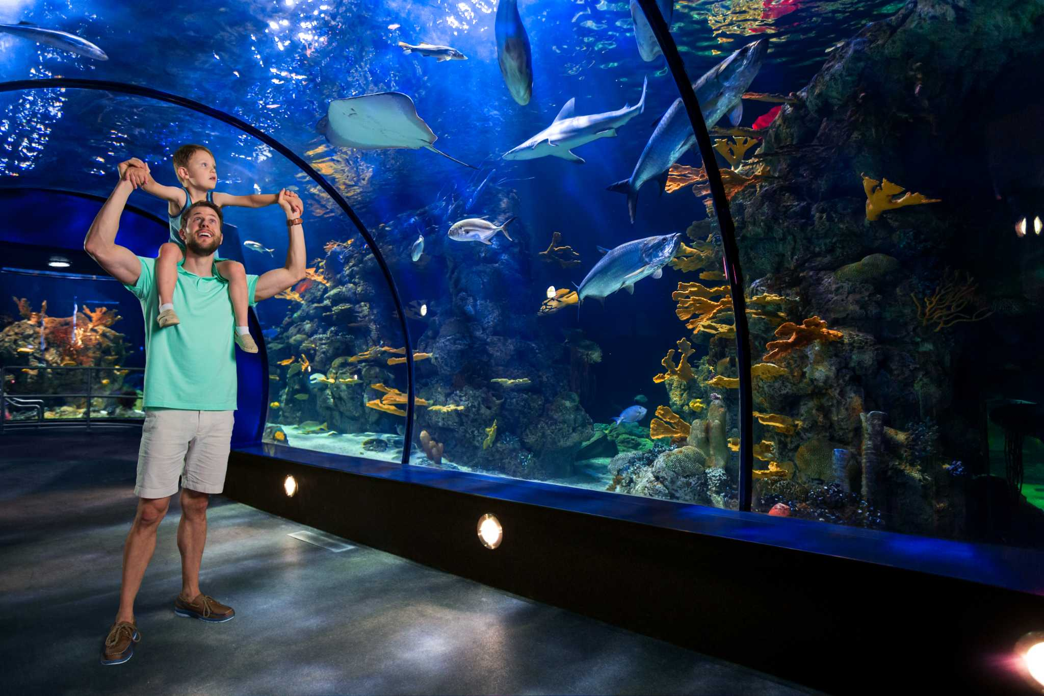 Moody Gardens To Reveal Aquarium Pyramid Renovations May