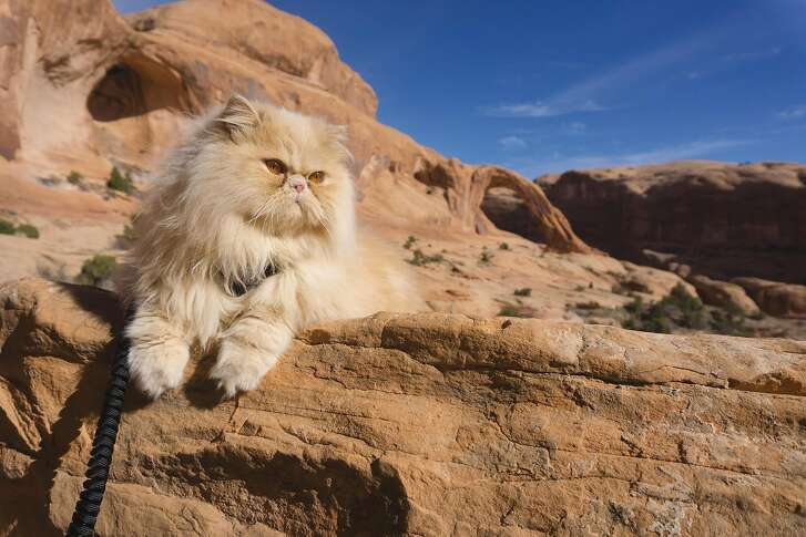 Floyd the cat enjoy walks in the outdoors, including to the canyons around Moab.
