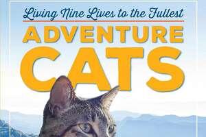 """Adventure Cats"" by Laura J. Moss (Workman Publishing)"