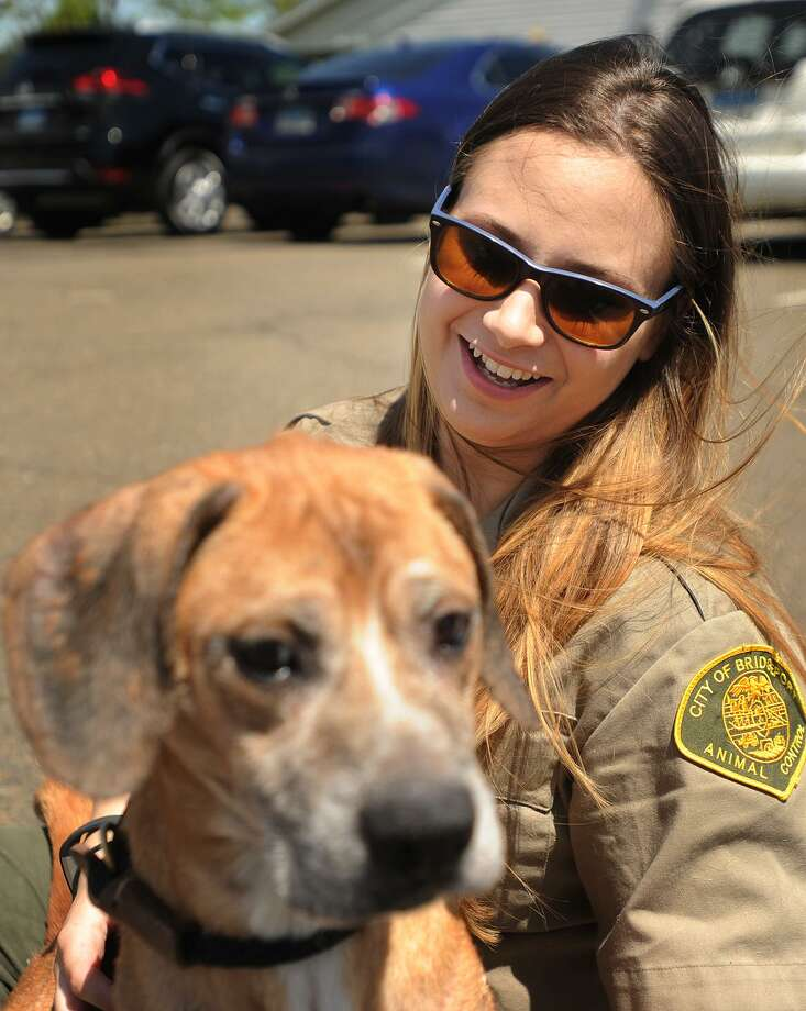 Animal Control Officer Jennifer Wallace with Sinatra, a hound mix currently recovering from severe malnutrition at the Bridgeport Animal Shelter at 236 Evergreen Street in Bridgeport, Conn. on Tuesday, May 16, 2017. The shelter is raising money through donations to build three separate outdoor play areas for the dogs. Photo: Brian A. Pounds / Hearst Connecticut Media / Connecticut Post