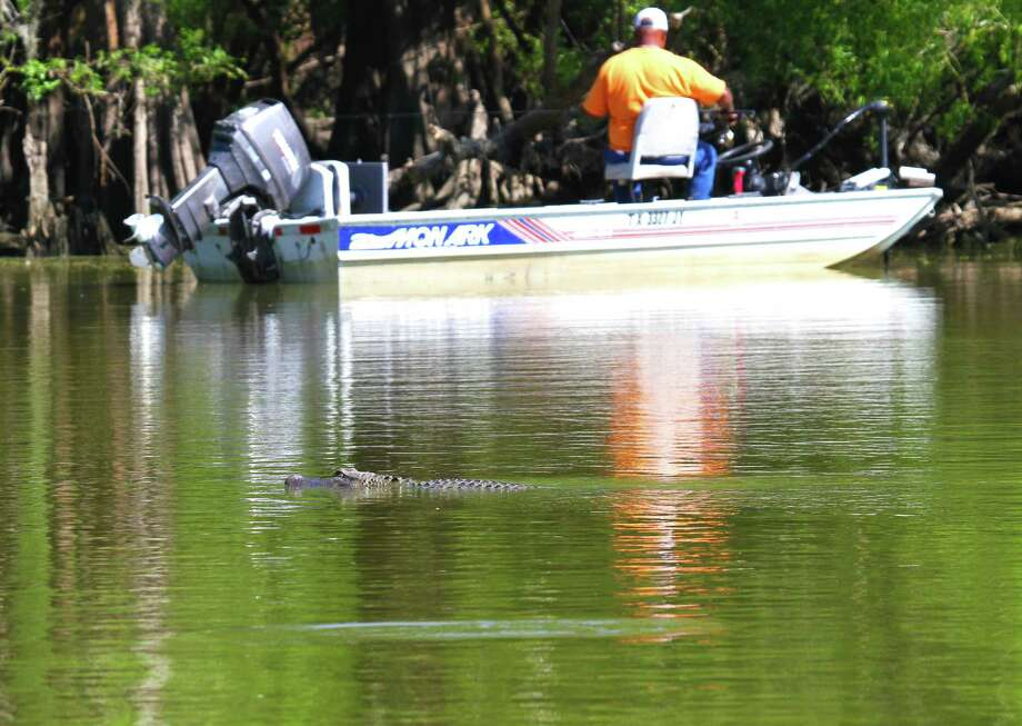 A late-spring day can find Southeast Texas anglers and alligators sharing the same water - a situation that creates no conflict as long as both sides respect the other. Photo: Shannon Tompkins
