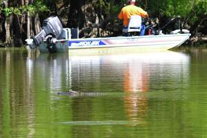 A late-spring day can find Southeast Texas anglers and alligators sharing the same water - a situation that creates no conflict as long as both sides respect the other.