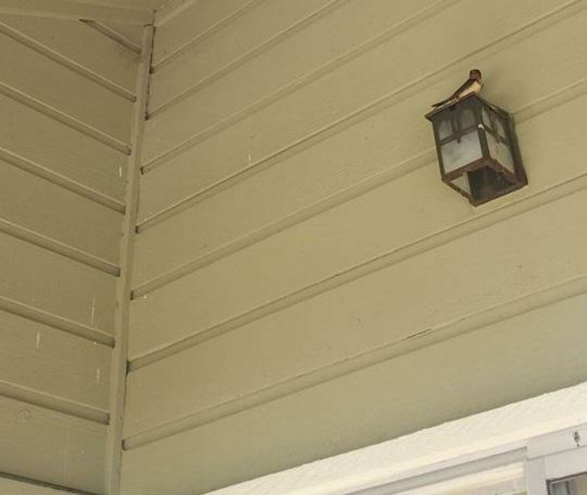 Elise Lauderdale captured photos of barn swallows nesting on her balcony at Honey Hill Apartments in San Antonio in early May. Lauderdale put up signs warning a powerwashing company that destroying the birds' nests is illegal under a 100-year-old wildlife law.