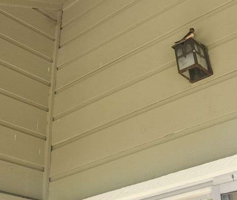 Elise Lauderdale captured photos of barn swallows nesting on her balcony at Honey Hill Apartments in San Antonio in early May. Lauderdale put up signs warning a powerwashing company that destroying the birds' nests is illegal under a 100-year-old wildlife law. Photo: Courtesy Photo /Elise Lauderdale