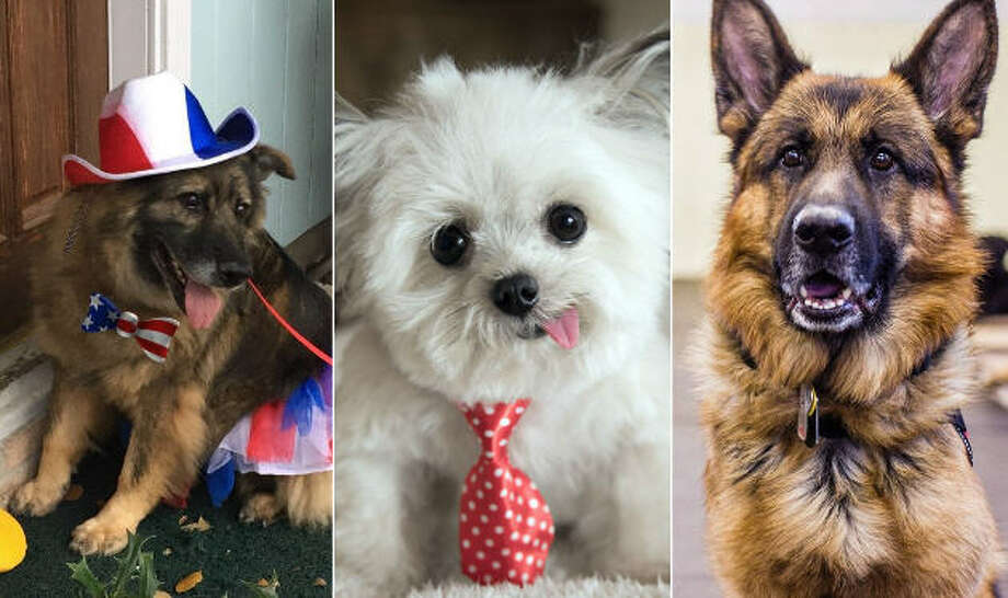 Continue clicking to see the dogs in the running for the American Humane Hero Dog Awards. Photo: American Humane Hero Dog Awards