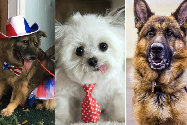 Continue clicking to see the dogs in the running for the American Humane Hero Dog Awards.