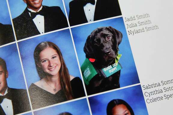 In classes at Cy-Fair High, Nyland typically sits next to senior Julia Smith's desk or lies underneath obediently. The year-old Labrador retriever has become part of the school's identity over the past year, even earning a place in the yearbook next to his trainer.