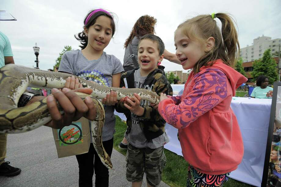 From left Isabella, 9, Christian, 6 and Sofia, 6, Ritacco of Stamford pet a Boa Python during the fourth annual STEMFest at Mill River Park in Stamford on Saturday. The free, daylong festival by Stamford Public Schools, featured hands-on science, technology, engineering and math activities for all ages. Photo: Matthew Brown / Hearst Connecticut Media / Stamford Advocate