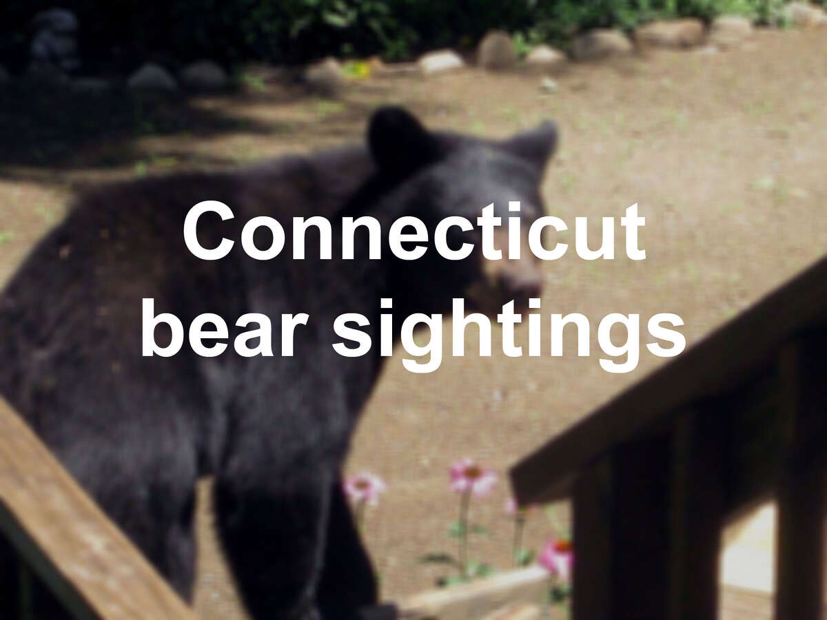 Click through the slideshow to see sightings of bears across Connecticut.