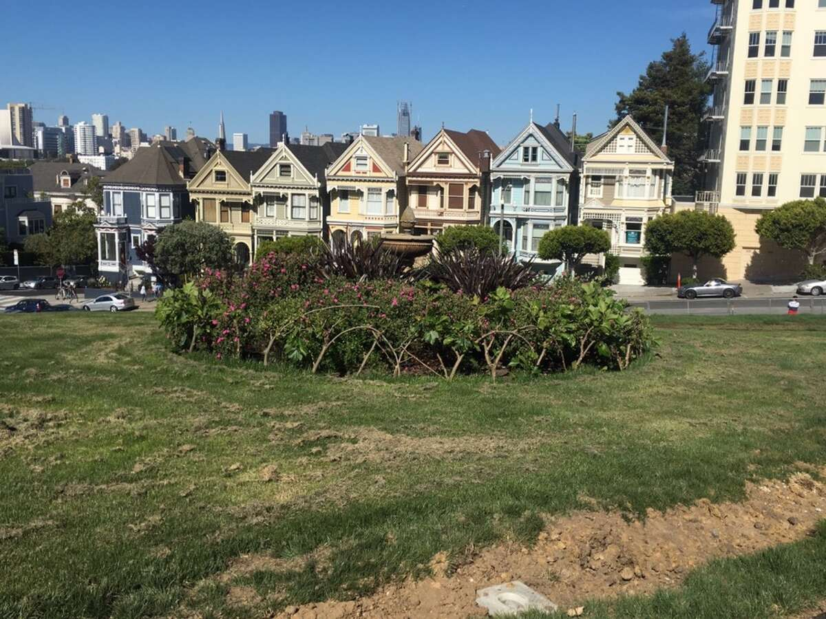 A shot of the Painted Ladies at Alamo Square Park.