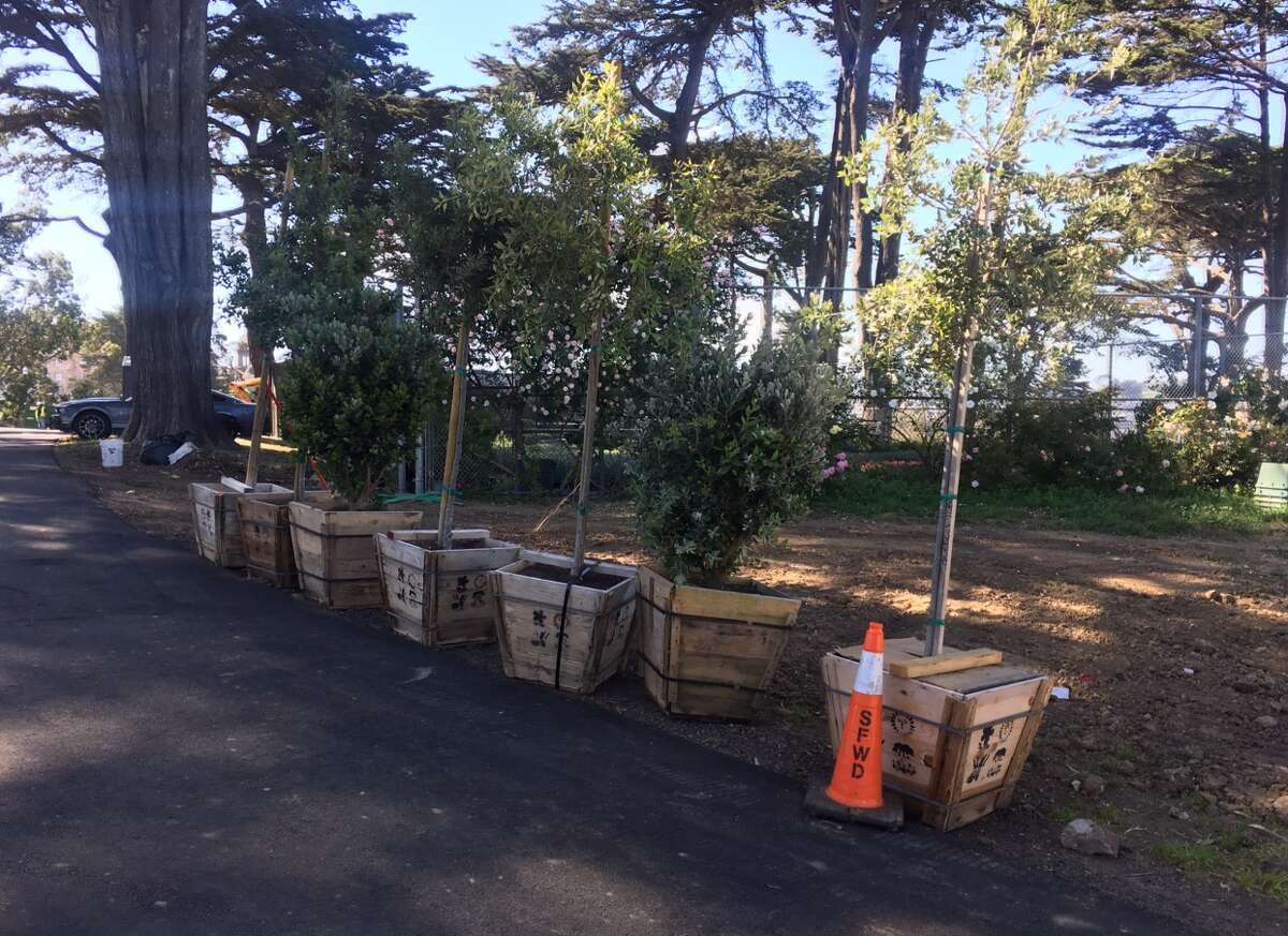 New trees and plants set to be planted before the grand re-opening.