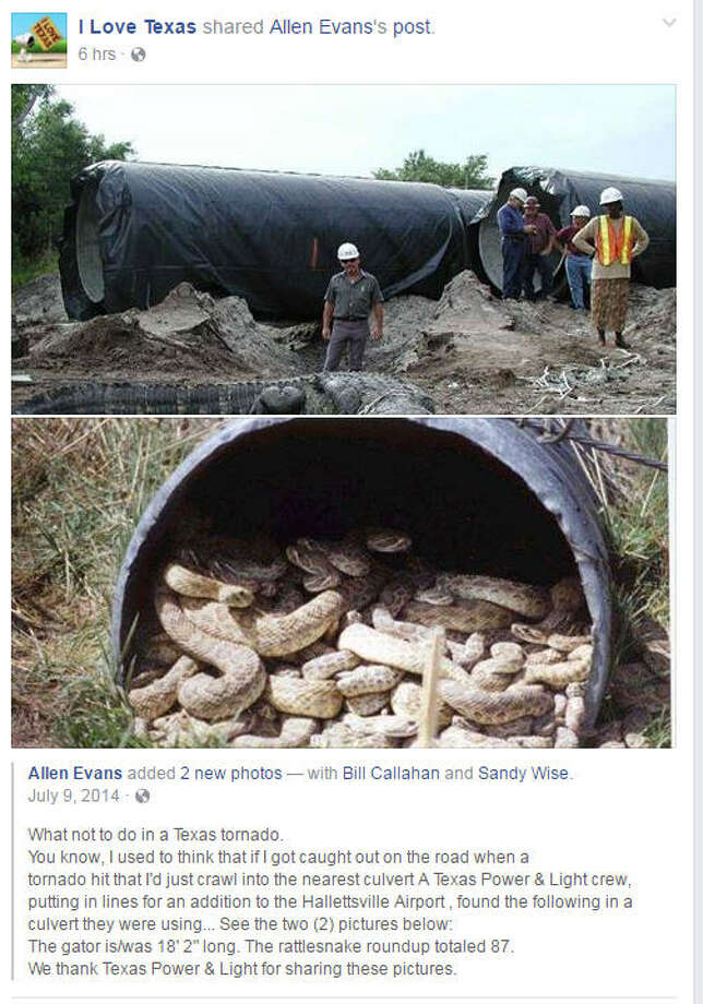 Photos alleging to show a giant rattlesnake den and a monster gator inside a Texas culvert, or drain pipe, are making the rounds among Texas Facebook users thanks to a post by I Love Texas. Photo: I Love Texas On Facebook