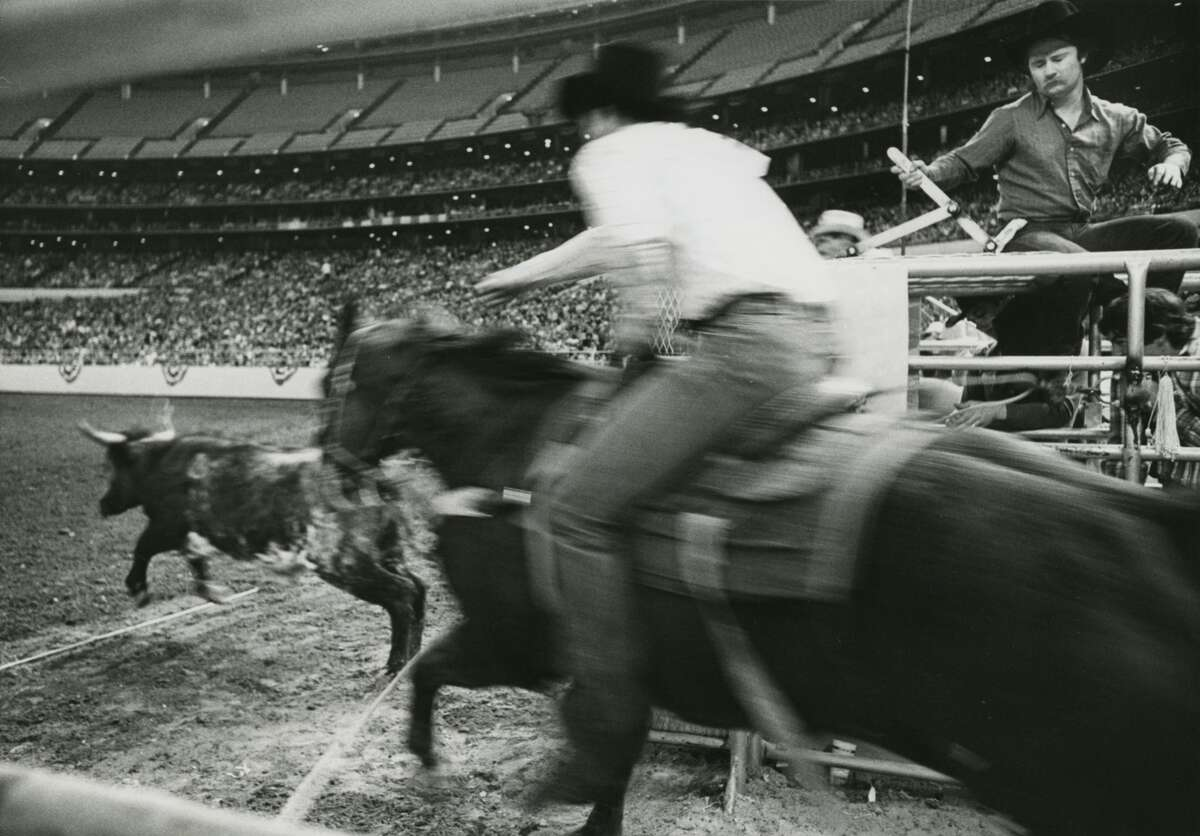 Spring 1977: Houston Livestock Show and Rodeo calf roping event at the Houston Astrodome.