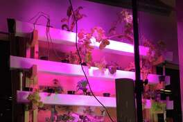 A group of mechanical engineering students at Rice University, called the Lettuce Turnip the Beet team, have come up with a way to cultivate vegetables indoors.