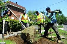 A Louis Barbatos Landscaping crew plants a tree on Maple Tree Ave. in Stamford, Conn. on Wednesday, May 17, 2017. The new trees are replacements for those that have recently died or were dying.