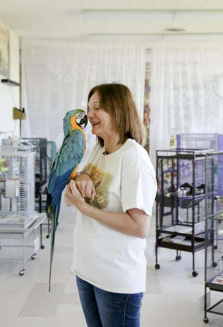 Birgit Soyka bonds with Diamond, a macaw, at the San Francisco Bird Hotel's lobby. Photo: Emily Harger, Special To The Chronicle