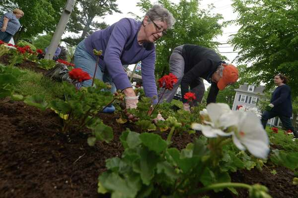 Norwalk Garden Club members including Diane Russell plant flowers around the gazebo, flag, and veteran's memorial on the Norwalk Green Wednesday, May 24, on behalf of the First Water District in Norwalk.