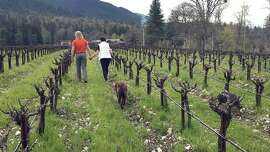 In this April 4, 2017 photo, Bill and Barbara Steele walk through their vineyard outside Jacksonville, Ore. The Steele's moved to this corner of southwestern Oregon more than a decade ago to produce their own wines and are now turning their attention to small-scale marijuana farming. The legalization of recreational marijuana in Oregon two years ago has opened the door for explosive growth in this fertile region and a handful of wineries and vineyards are diversifying by investing in the crop. (AP Photo/Gillian Flaccus)