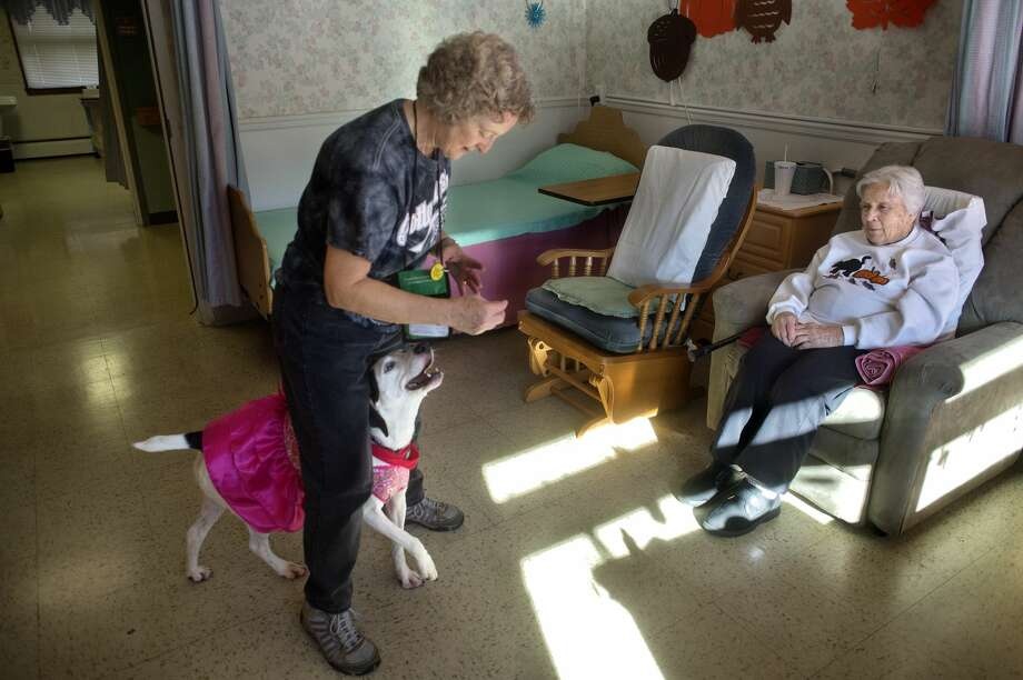 Jean Thompson of Sanford shows Brittany Manor resident Nina McGraw part of her Jack Russell-Labrador mix Shelia's dance routine during their weekly visit at Brittany Manor November 4, 2016. Thompson brings Shelia to visit residents at Brittany Manor every Friday and Brookdale every other Tuesday. Photo: Brittney Lohmiller/Midland Daily News/Brittney Lohmiller