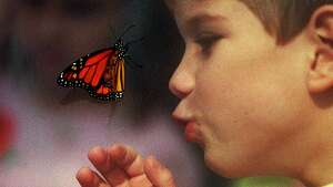 Plano Butterfly Festival       May 5-28    Take a staff-guided tour of the butterfly house in Plano. Learn aboutthe anatomy of the butterfly, its life cycle and ecosystem. See a chrysalis hatch. Everyone gets the chance tofeed a butterfly. Tickets are $6 adults / $5 kids / under age 2 free.  http://www.greaterplanokiwanis.org/butterfly_festival.htm