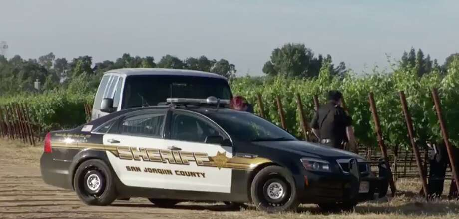 A veteran skydiver fell to his death on Wednesday after his parachute failed to deploy. He crashed into a vineyard near the Lodi Airport. Photo: Screen Grab KCRA