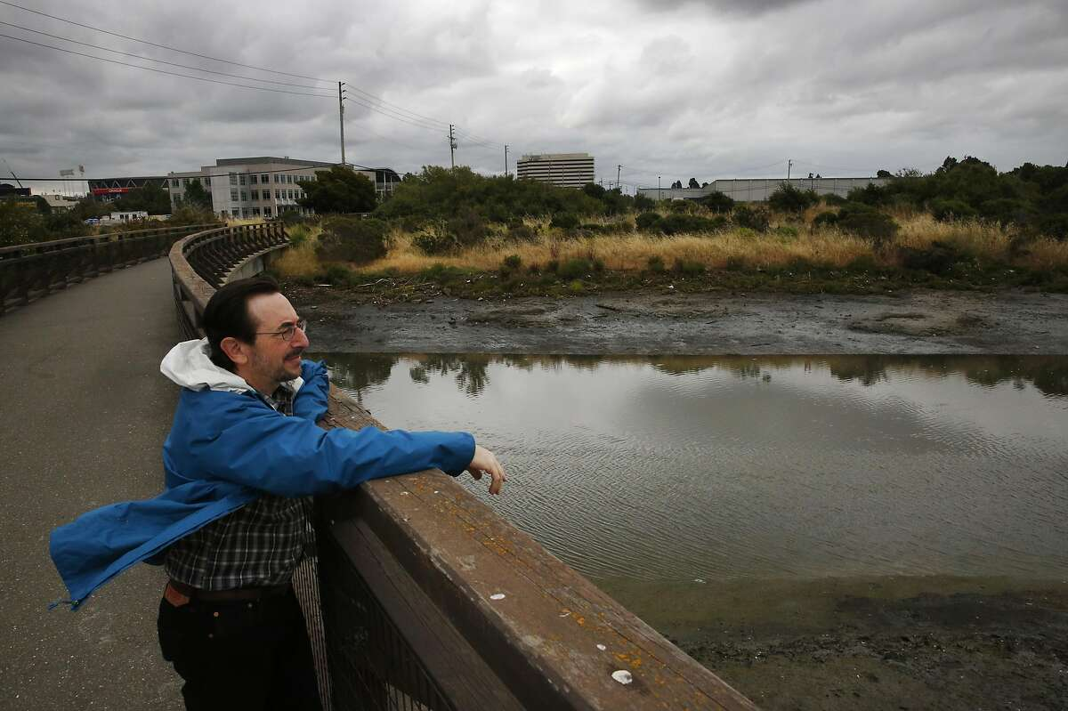 David Lewis, the Executive Director of Save the Bay looks out over the Damon Slough while being interviewed by the Chronicle May 26, 2017 in Oakland, Calif.