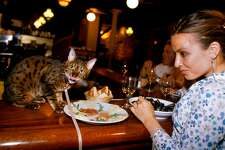 FRANCE - JULY 31:  Madeleine Niss in France on July 31, 2003 - Madeleine Niss and her cat Harry at fish restaurant.  (Photo by Jean-Erick PASQUIER/Gamma-Rapho via Getty Images)