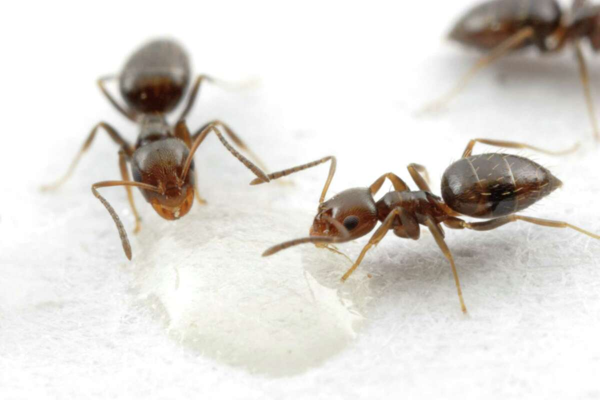 Photographer Alexander Wild took this picture of rover ants and sued a Houston-area pest control company, claiming it used his image without permission.