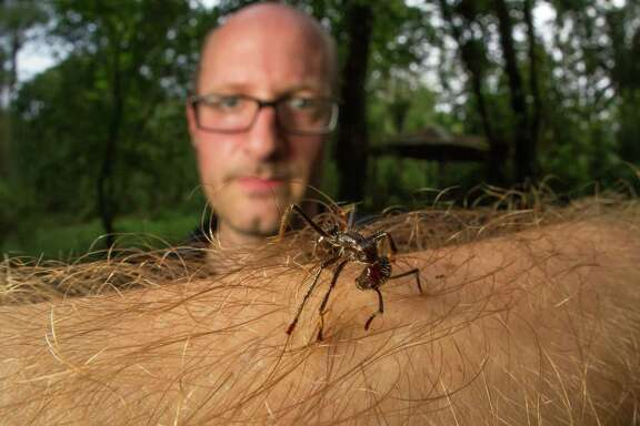 A bullet ant in Costa Rica makes itself at home on Alexander Wild's arm. Nature and other publications have used his photos.