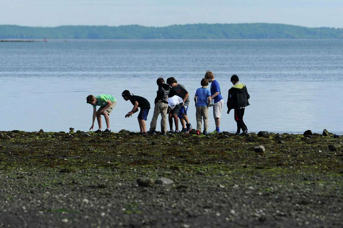 SoundWaters campers chase crabs during low tide at Cove Island in Stamford last week.