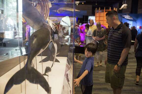 """JP Son and his son Daniel Son, 7, explore a display at the """"Whales: Giants of the Deep"""" exhibit at the Witte Museum in May. The museum won the 2017 Readers' Choice award for Best Local Museum."""