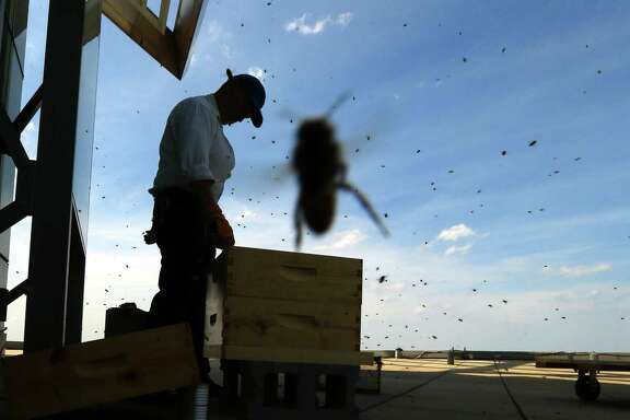 With several bees hovering over him, Michael Thompson of Chicago Honey Co-op installs three beehives on the roof  an office building in the West Loop in Chicago.