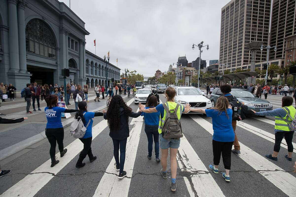 Activists slow traffic for the rest of the 350 Direct Action Everywhere marchers heading to Pier 39 on The Embarcadero on Sunday, May 28 2017, in San Francisco, CA.
