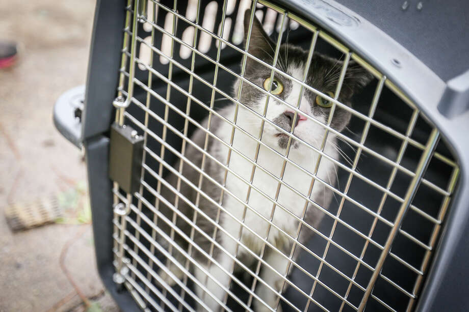 Smokey The Cat Was Found Hiding In The Burned Apartment Building Of Holly  Creek Apartments And