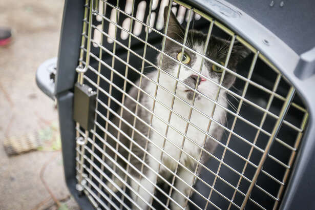 Smokey the cat was found hiding in the burned apartment building of Holly Creek Apartments and rescued Monday morning.
