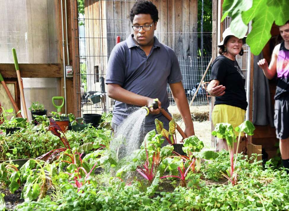 Albany High student Javon Morgan collects eggs in the hen house at Radix Eco. Sustainability Center Wednesday May 17, 2017 in Albany, NY. (John Carl D'Annibale / Times Union)