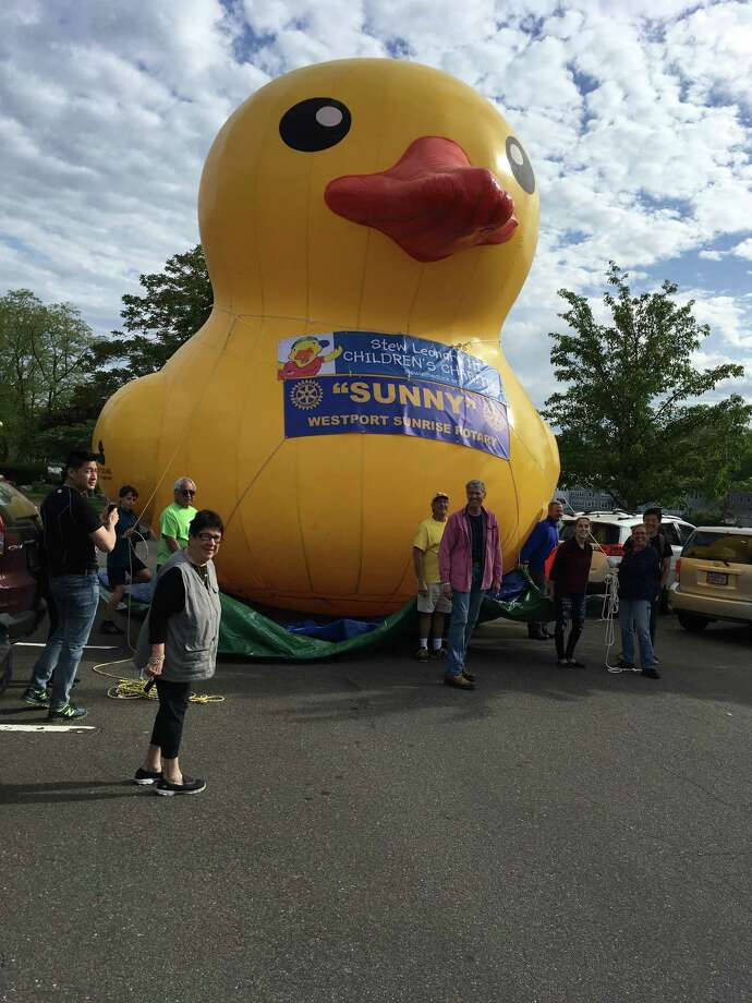 Sunny the duck. Photo: Jeff Cohen / Contributed Photo / Westport News