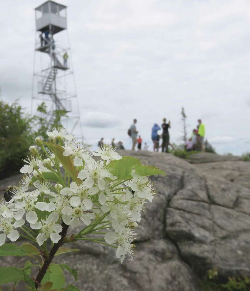 Wildflowers and the fire tower on Hadley Mountain. (Herb Terns / Times Union)