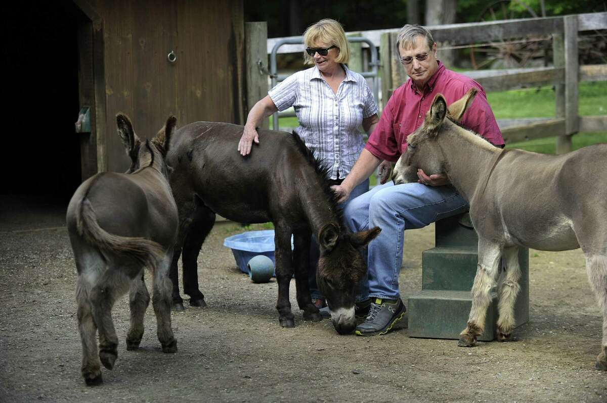 Megg and Ted Hoffman with their three remaining donkeys, Merlin, Max and Murdock, on their Kent farm Thursday. A fourth donkey was killed by a bear recently.