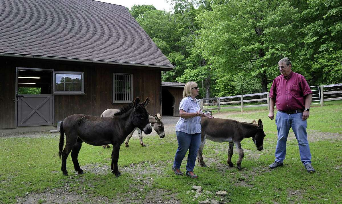 Megg and Ted Hoffman with their three remaining donkeys, Max, Murdock and Merlin, on their Kent farm Thursday, June 1, 2017. A fourth donkey was killed by a bear recently.